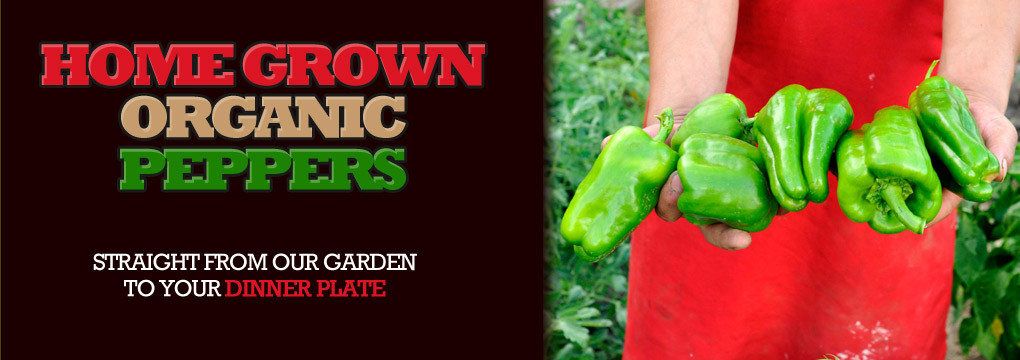 Organic, fresh, homegrown peppers